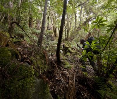 Bushwalking in Tasmanien – BR